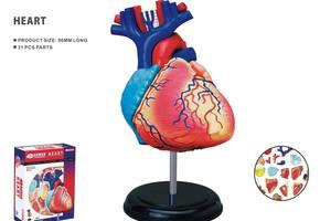 3D hjertet