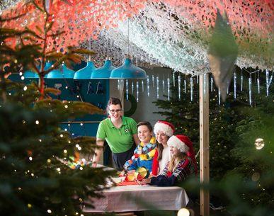 Stemningsfull juletreskog